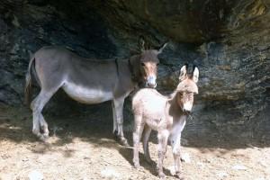 Esel-Flicka-und-Mara-(2)