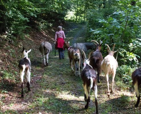 Unterwegs mit den Geissen und Eseln